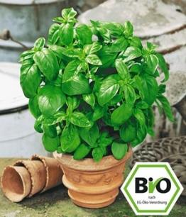 Attila Hildmann BIO-Basilikum ´Genoveser´,1 Pflanze
