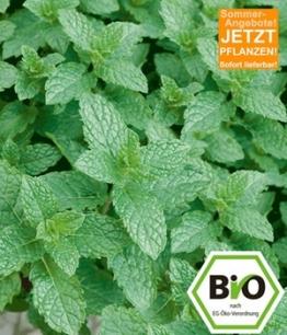 Attila Hildmann BIO-Pfefferminze,1 Pflanze