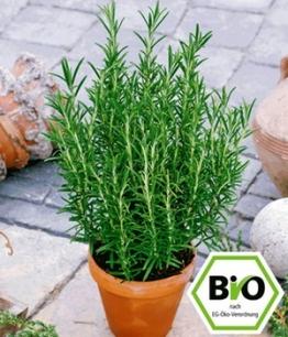 Attila Hildmann BIO-Rosmarin,1 Pflanze
