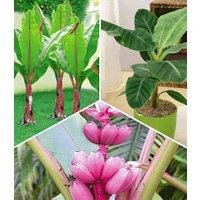 Bananen-Pflanzen Kollektion