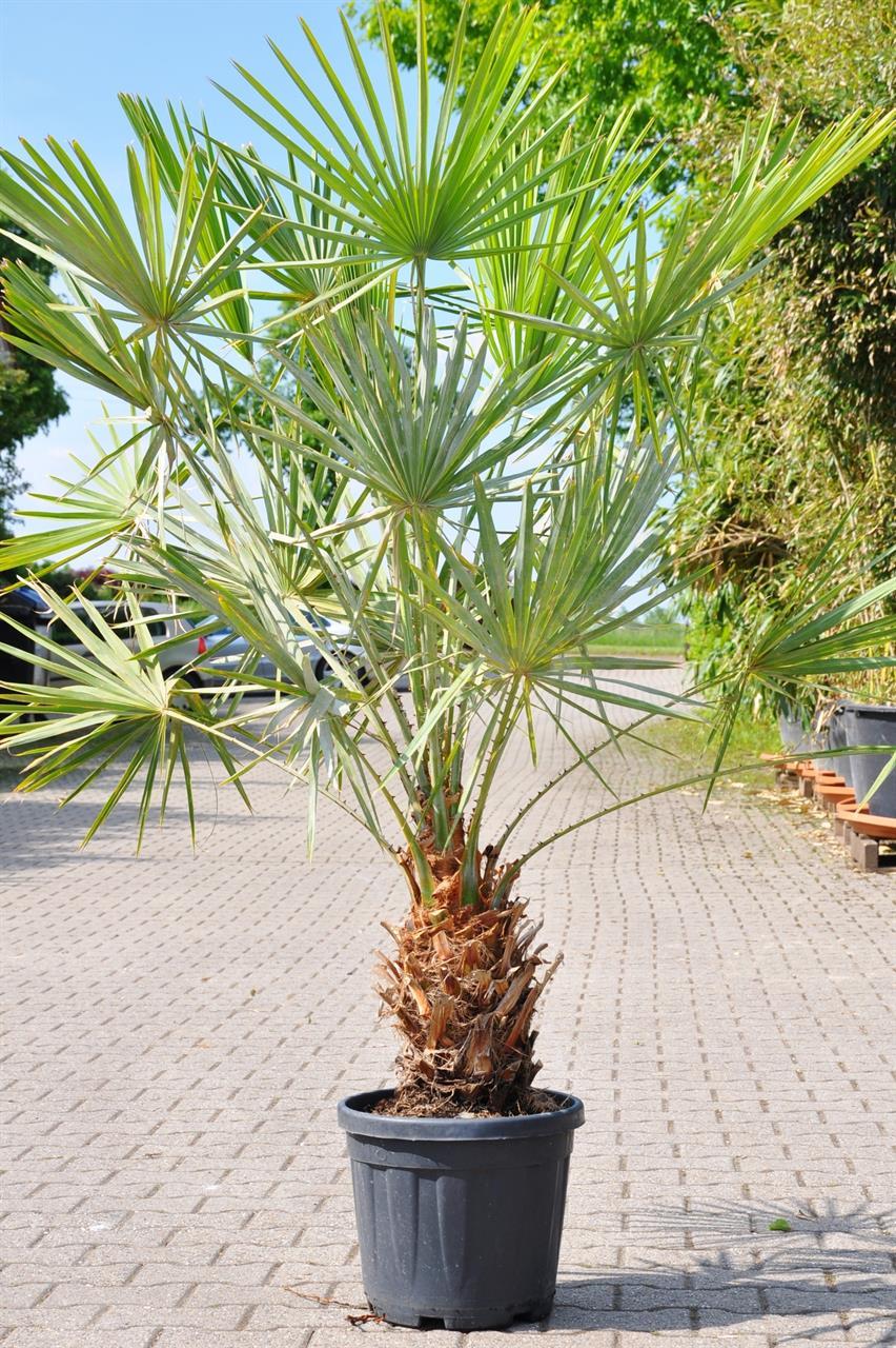 Caranday palme shop ambiente mediterran - Badmobel mediterran ...