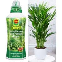COMPO®  Palmendünger & Areca Palme ca. 50 cm hoch