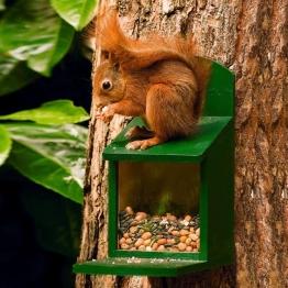 Eichhörnchen Futterautomat, 25x28x13, Holz, grün