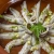 FUMOSA keramische Grillschale Piataci für Grill & Ofen - Cazuela - Tapas Keramik Schale - 2X 18 cm - 9