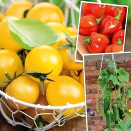 Gemüse-Set-Balkonien Redskin, Primagold, Ministar