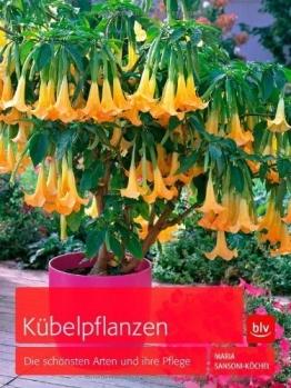 Kübelpflanzen: Die schönsten Arten und ihre Pflege von Maria Sansoni-Köchel (Februar 2013) Gebundene Ausgabe - 1