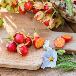 Litschi-Tomatenpflanze Star Benas, im ca. 13 cm-Topf