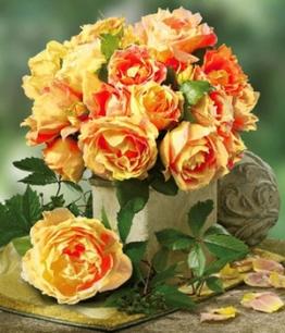 Maler-Rose&reg, ´Paul Cézanne&reg,´,1 Pflanze