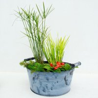 Miniteich-Wanne Zinkoptik mit Wasserpflanzen