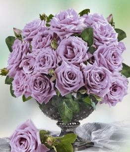 Parfum-Rose ´Mamy Blue&reg,´,1 Pflanze