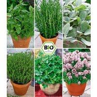 Pflanzenmix für Hochbeete 'BIO Kräuter'