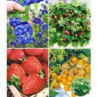 Pflanzenmix für Hochbeete 'Obst'