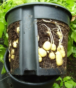 PotatoPot®