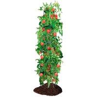 Tomaten-Rankhilfe