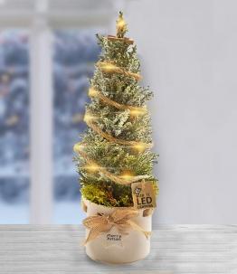 Weihnachtsbaum dekoriert im Keramik-Übertopf mit LED-Lichterkette