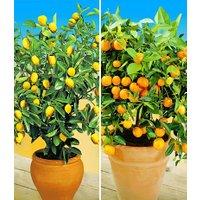 Zitronen- & Orangenbaum