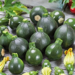 Zucchini Eight Ball, F1